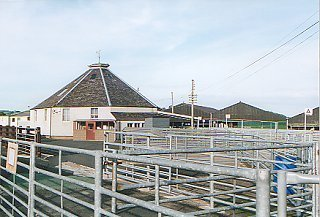 Cattle Market at Newtown St Boswells