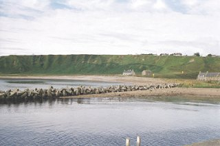 Dunbeath Bay and Harbour