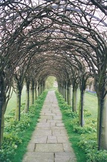 Colonnade of Trees, St. Mary's Pleasance, Haddington
