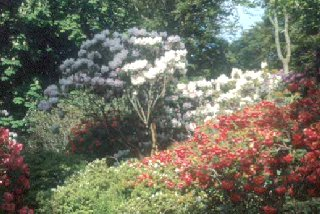 The Garden at Brodick Castle