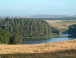 Rosebery Reservoir