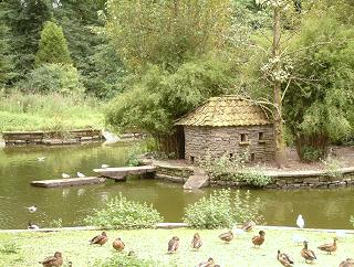 Duck Pond, Camperdown Park, Dundee