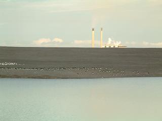 Cockenzie Power Station from the Musselburgh Ash Lagoons