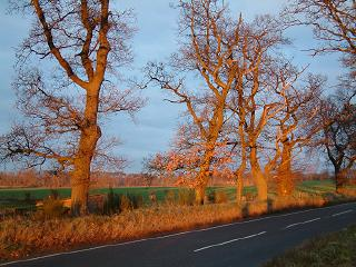 Fire-red trees at Sunset on Speyside