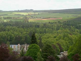 View over Bowhill to the Ettrick Forest